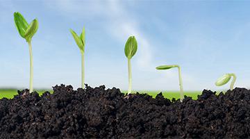 Terricci e sementi